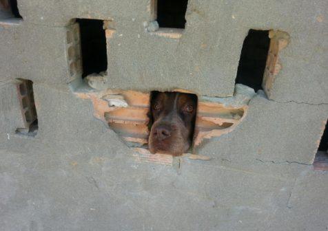 PACMA. perro en zulo